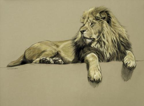 Gary Stinton Study of African Lion at Rest 2018 Pastel and charcoal on paper
