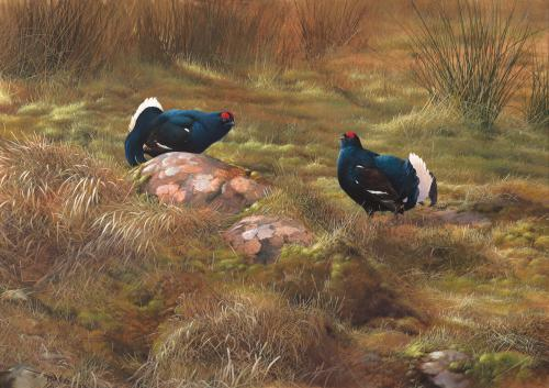 """Terence Lambert Two Male Black Grouse 33"""" x 47"""" Inches Signed"""