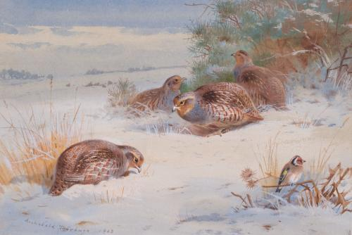Partridge and Goldfinch in a winter landscape