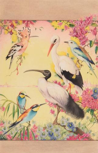 Birds, Edward Julius Detmold (British 1887-1957)